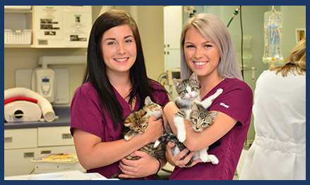Veterinarians in Kasson MN